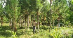 Finca Agroforestal, Investition