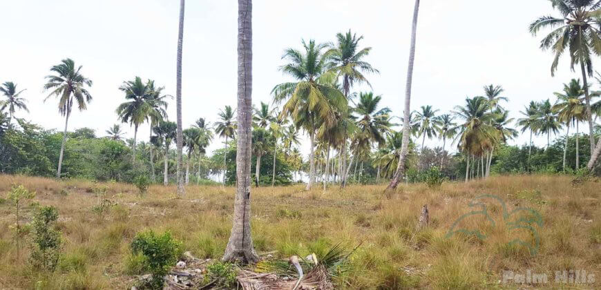 Beachfront property with many palm trees, ideal for a project