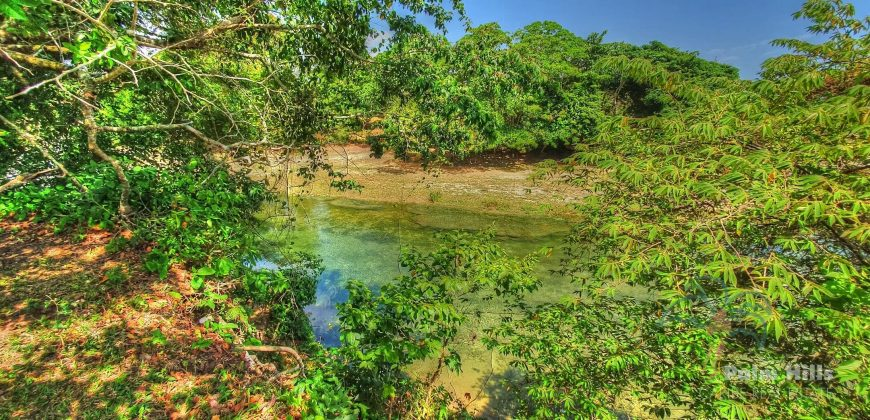 Farm with ocean view and river, near Cabarete, Real estate